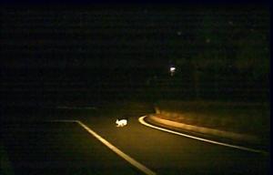野ウサギと遭遇