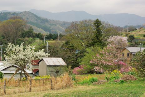 畑からの眺め春