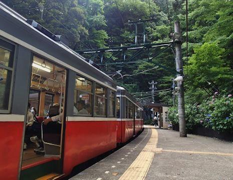 紫陽花の咲く塔ノ沢駅