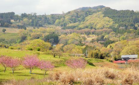 柳川の里山風景