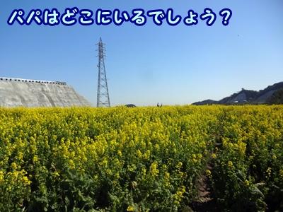 b_20150327_15.jpg