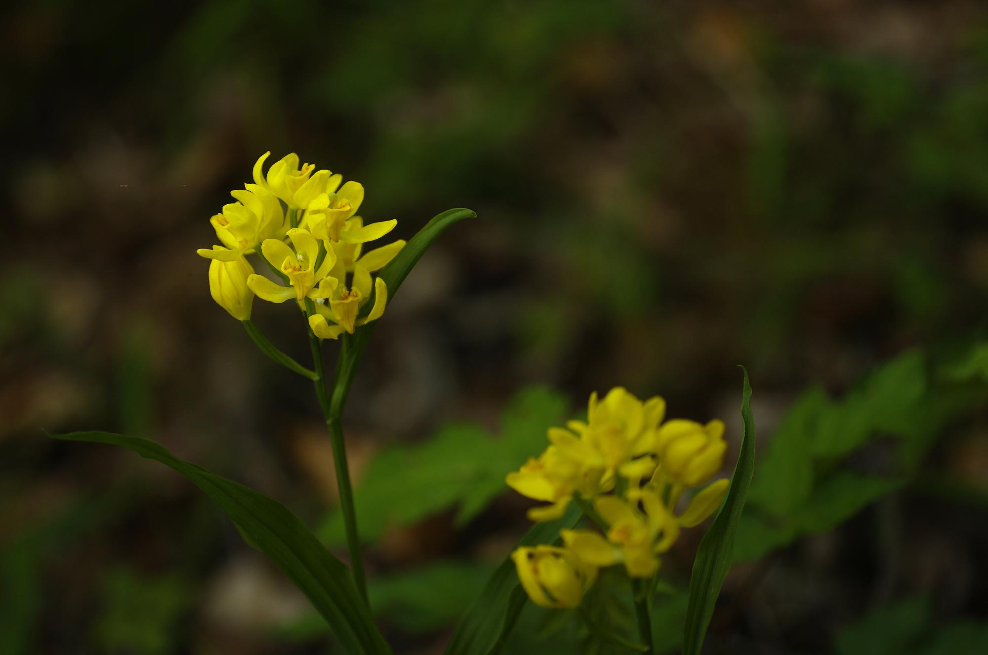 2015-04-26-0267_4.jpg