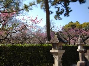 北野天満宮の閉園な梅苑