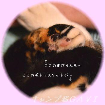 150703_3676.jpg
