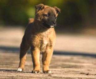 流星ワゴン第二話の子犬虐待に関する画像