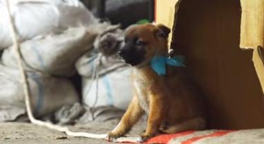 流星ワゴン第二話の非難殺到した子犬虐待シーンの画像