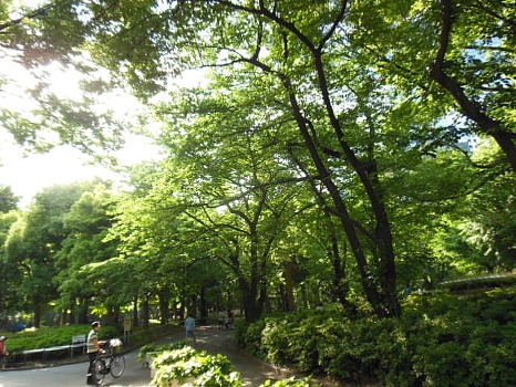 新宿中央公園の新緑