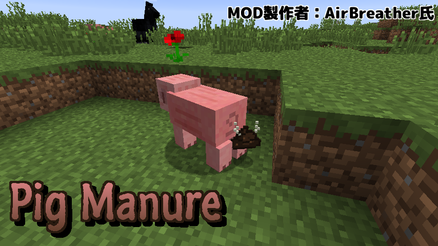 Pig Manure-1
