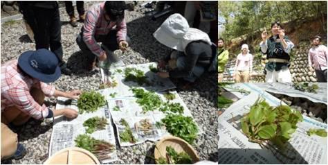 GWW・山菜仕分け