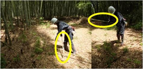 GWW竹・竹で枝打ち