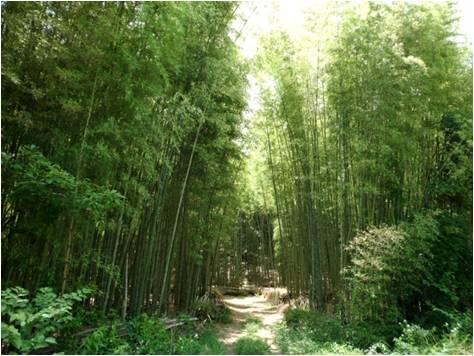 GWW竹・竹林入口