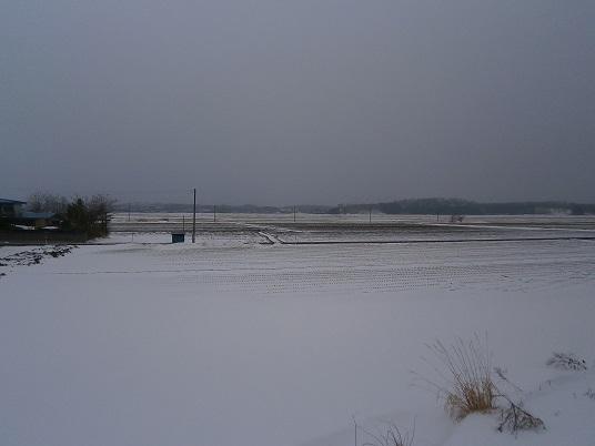 田の雪2015