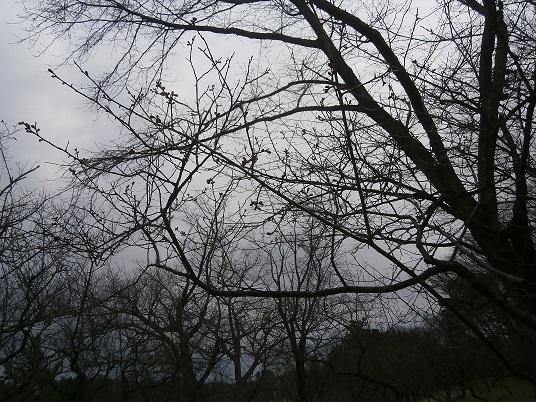 小泉潟公園5