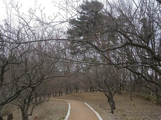 小泉潟公園8