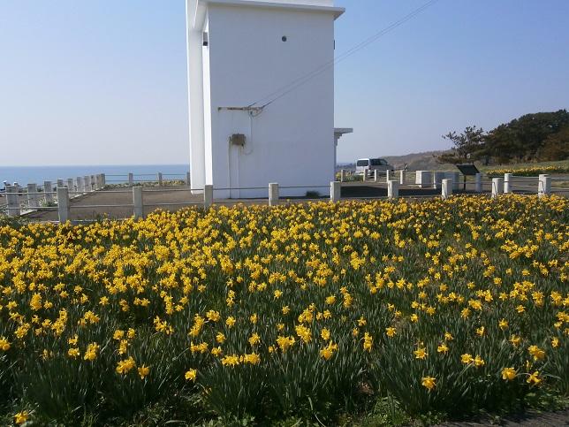 黄色い花と灯台