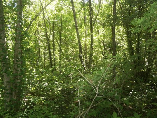 木漏れ日5