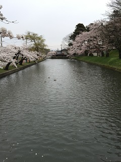 鶴岡公園 2015 3