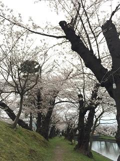 鶴岡公園 2015 1