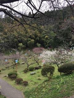 梅林公園 梅まつり 2015 1