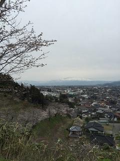 大山 桜まつり 2015 3