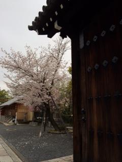 2015 04 03 壬生寺 桜-1