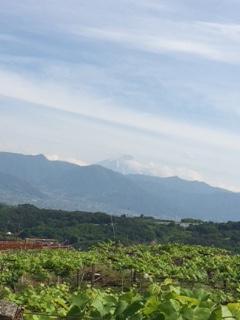 2015 05 17 旭洋酒-2