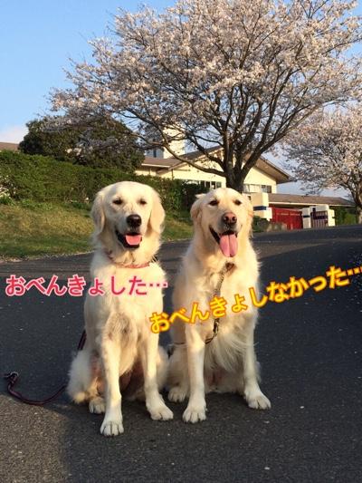 fc2blog_20150407205408987.jpg