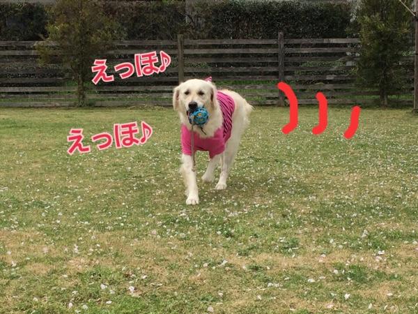 fc2blog_201504082125456fa.jpg
