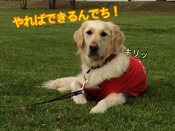 fc2blog_2015041208353346e.jpg