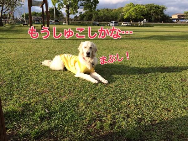 fc2blog_201504132116168b3.jpg
