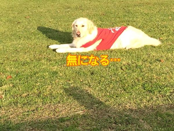 fc2blog_20150413211738516.jpg