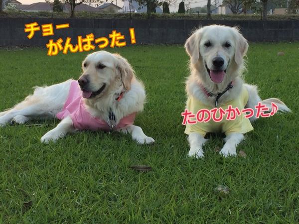 fc2blog_20150415211750c9f.jpg
