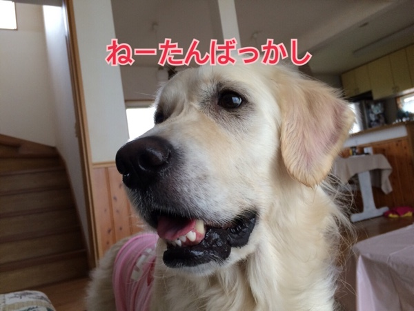 fc2blog_2015042506464436e.jpg