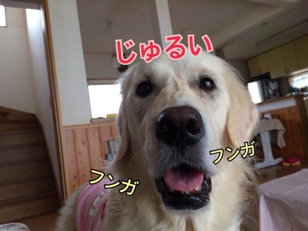 fc2blog_20150425064708693.jpg