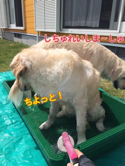 fc2blog_201505010611021ca.jpg