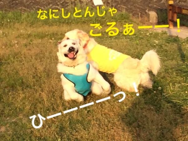 fc2blog_201505041523421c9.jpg