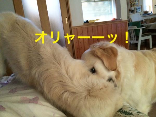 fc2blog_201505231009540db.jpg