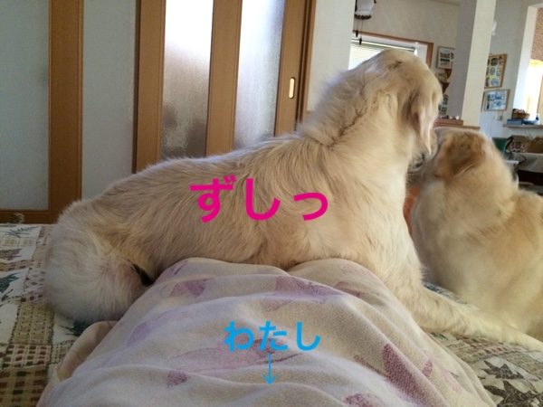 fc2blog_20150523101259942.jpg
