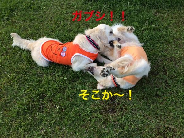 fc2blog_20150525221637e85.jpg