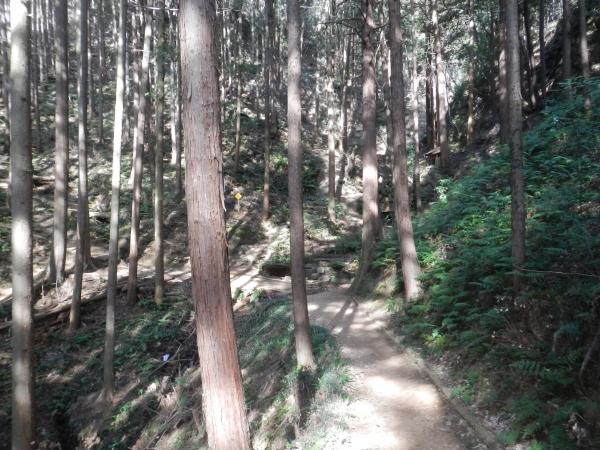 日和田山・物見山 009