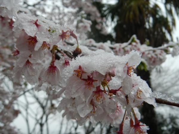 東京雪 005