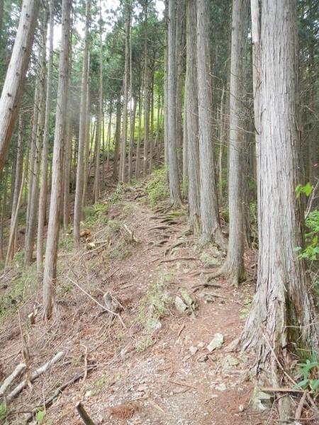 市道山・臼杵山 057