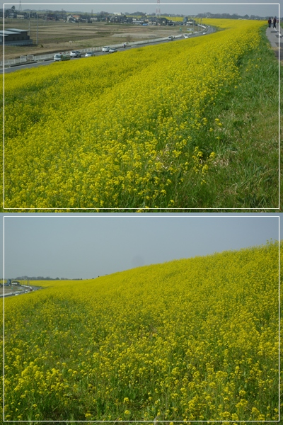 P1130752-vert.jpg