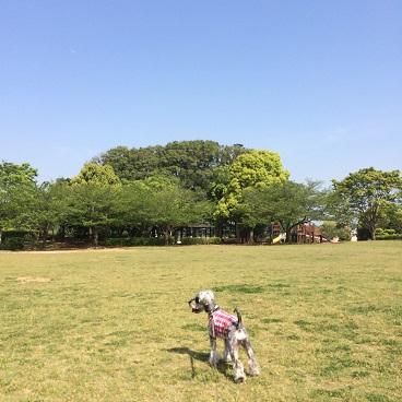 鷹の台公園1