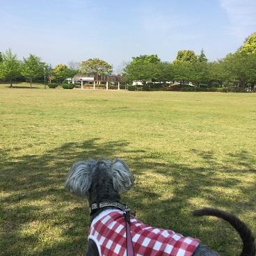 鷹の台公園2