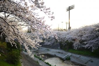 2015_03_31_04.jpg