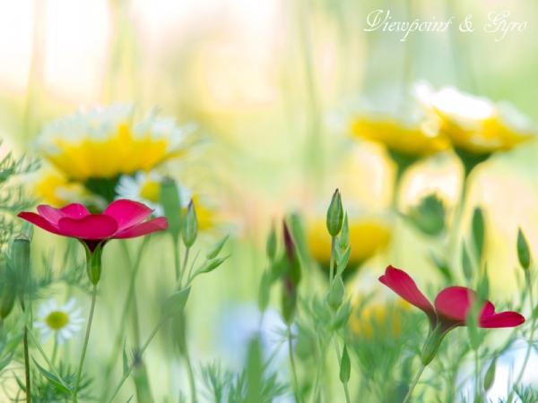 花菜ガーデン B