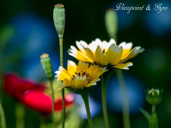 花菜ガーデン C