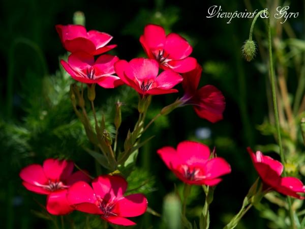 花菜ガーデン F