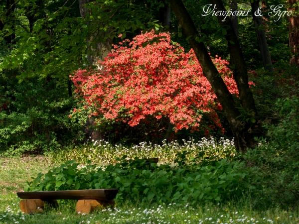 赤城自然園 D